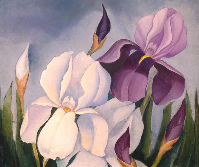 Henrietta Shore - Irises