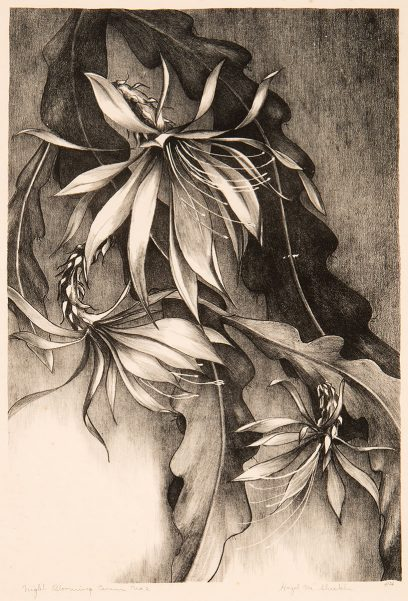 Hazel M. Sheckler – Night Blooming Cereus, No. 2