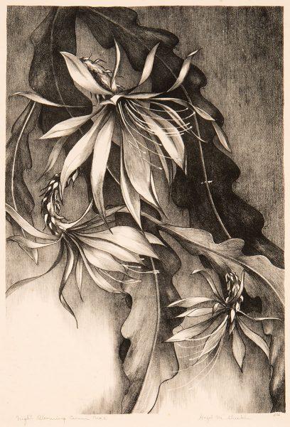 Hazel M. Sheckler – Night Blooming Cereus, No. 2