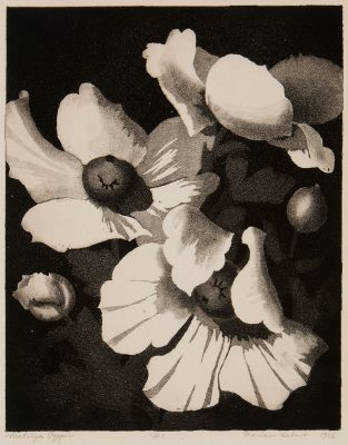 Marian Hebert - Matilija Poppies