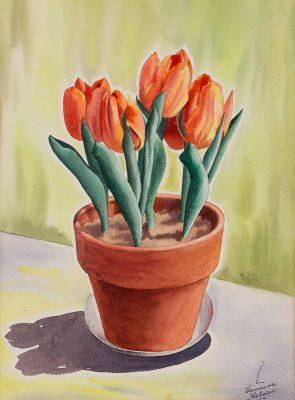 Zama Vanessa Helder - Tulips