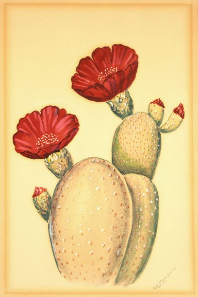 A. A. Meripol – Untitled (Cactus Flower)