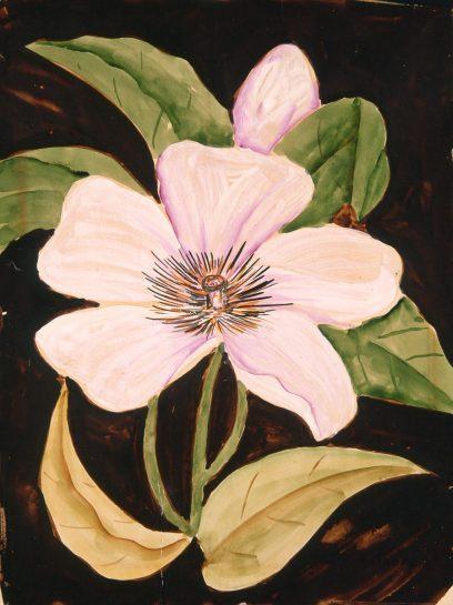 Henrietta Shore (attr.) – Hibiscus