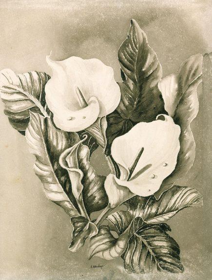 Elmer Stanhope - Calla Lilies